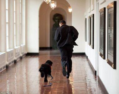 Cainele familiei Obama a muscat-o de fata pe prietena Maliei, fiica fostului presedinte...