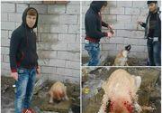 Au taiat urechile unui caine si i le-au dat sa le manance. Imaginile au fost postate pe Facebook