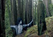 Un desen de-a dreptul impresionant dintr-o padure a atras atentia intregi lumi. Un artist a incercat sa explice cat de importanti sunt arborii in lume