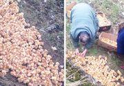 """Peste 1.000 de pui de gaina au fost dusi pe un camp si lasati sa moara: """"Nu am mai vazut niciodata asa ceva"""""""