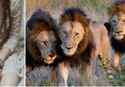 O fetita de 12 ani a fost rapita de 7 barbati. Credeau ca isi pot face de cap cu ea, dar cand leii i-au incercuit au facut ceva care a lasat o lume intreaga fara explicatie