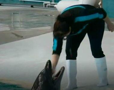 Delfinii din Constanta au avut parte de un adevarat ospat de Craciun!