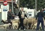 """Oile lui Gigi Becali au imputit vilele milionarilor din Pipera: """"Deja se vand mai greu casele din cauza stanei"""""""