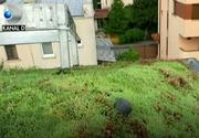 Vrem mai mult spatiu verde, dar nu avem loc pentru o gradina, nici macar pentru cativa metri patrati de gazon? Ei bine, solutia exista!