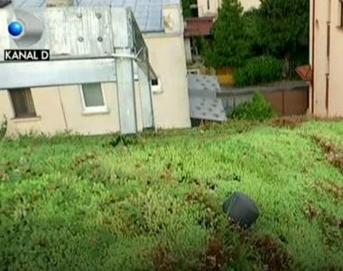 Vrem mai mult spatiu verde, dar nu avem loc pentru o gradina, nici macar pentru cativa...
