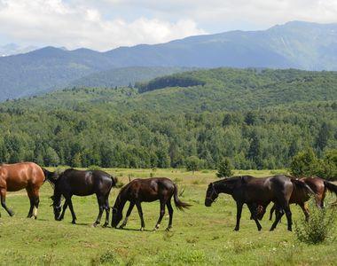 O alternativa foarte buna pentru o iesire in weekend poate fi festivalul cailor de...
