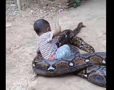 Video socant! Un copil se juca cu un piton gigantic in timp ce parintii lui il filmau....