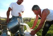 Tara in care laptele a ajuns mai ieftin ca apa minerala! Fermierii sunt disperati