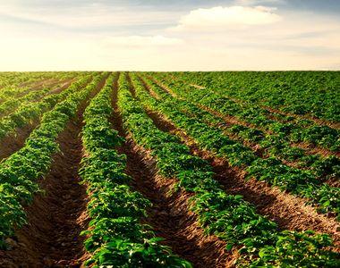Guvernul vrea sa ingreuneze mai mult vanzarea terenurilor agricole catre straini