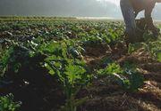 Suprafata agricola cultivata cu produse ecologice s-a triplat in 10 ani. Pe ce loc suntem in UE