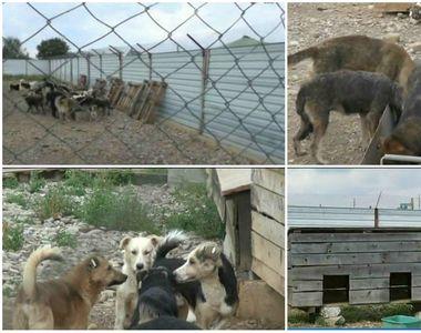 Ce s-a schimbat la adapostul public de animale din Baicoi, la 4 luni de cand au fost...
