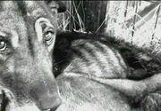 Autoritatile din Valcea inchid ochii la ceea ce se intampla cu animalele chinuite la adapostul public Feteni. Care e explicatia lor