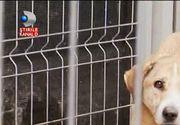 Oamenii vor sa doneze 40 de custi pentru cainii din adapostul Buftea, insa Primaria le respinge donatia si lasa animalele sa inghete