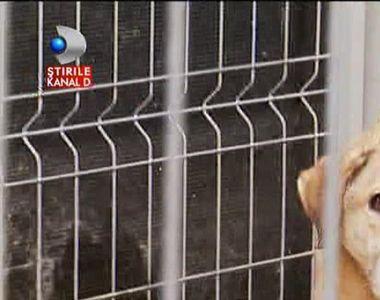 Oamenii vor sa doneze 40 de custi pentru cainii din adapostul Buftea, insa Primaria le...