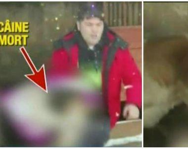 Imagini cumplite de la adapostul public din Balotesti. De foame, cainii se mananca...