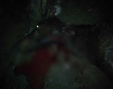 Un bărbat din județul Olt a ucis cu bestialitate o iapă pentru că aceasta nu mai putea...
