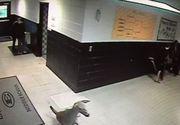O caprioara a intrat intr-o scoala din Mississippi. Ce s-a intamplat cu vizitatorul neasteptat te va amuza