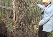 Descoperire SOCANTA facuta de un barbat in timp ce planta cartofi in gradina. Explicatia sotiei l-a ingrozit si a mers imediat la Politie