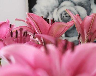 """Descopera """"floarea Fecioarei Maria""""! Ce floare este """"Arhanghelul..."""