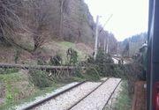 Circulaţie feroviară întreruptă în judeţul Hunedoara, după ce un copac s-a prăbuşit peste calea ferată