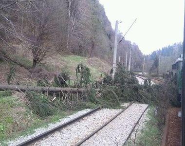 Circulaţie feroviară întreruptă în judeţul Hunedoara, după ce un copac s-a prăbuşit...