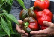 Legume românești de Sărbători. Fermierii din mai multe zone din ţară cresc în solarii de la roşii cherry, până la salata românească