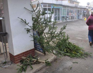 Orașele din România s-au umplut de brazi aruncați pe străzi. Ce spun autoritățile că...