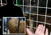 Genocidul animalelor: ce se întâmplă cu proprietarul adăpostului care a lăsat 60 de câini să moară de foame? Imaginile au şocat internetul