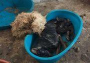 Zeci de cadavre de câini descoperite într-un adăpost din Brașov