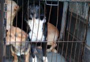 Administratorul adăpostului în care au fost găsite cadavrele a zeci de câini, eliberat după doar 24 de ore