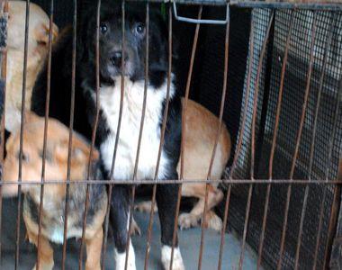 Administratorul adăpostului în care au fost găsite cadavrele a zeci de câini, eliberat...