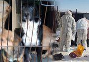 Traficul de câini, o afacere de sute de mii de euro pe an! România a ajuns în atenția organizațiilor internaționale