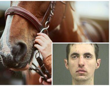 A pus o găleată în spatele calului, s-a suit pe ea și... Ce a pățit după ce a aflat...