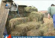 Cultivam BIO sub 1%! Fermierii se plang ca nu sunt ajutati de stat