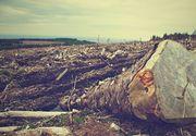 Au tăiat cu totul o pădure seculară! Dezastrul care s-a produs în Iași!