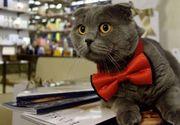 Bossulica, motanul devenit celebru in mediul online, este acum stapanul propriei afaceri!