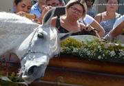 Imagini sfâșietoare de la înmormântare! A murit în accident de mașină, iar calul lui a jelit pe sicriu