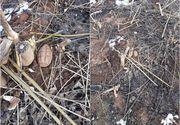 Descoperire neașteptată într-un cimitir din Giurgiu