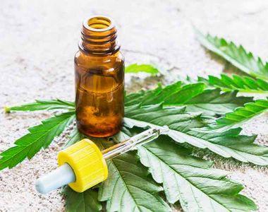Utilizarea cannabisului in scopuri medicale este de acum legala si in tarile membre ale...