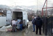 Focare de pestă porcină africană, confirmate în judeţele Bacău şi Botoşani