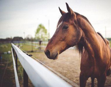 Incident șocant. O femeie a fost ucisă de calul din ogradă