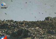 A fost închisă de autorități, însă groapa de gunoi de la Glina continuă să le facă viața un iad celor care locuiesc în apropiere