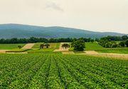 Romanii, tot mai pasionati de agricultura! Care sunt proiectele dezvoltate ce spera sa le aduca o afacere de succes?