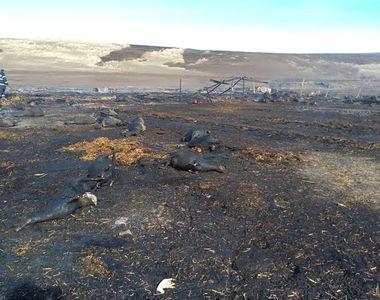 Nenorocire uriașă la Pechea, în Galați! Au ars peste 180 de suflete nevinovate într-un...
