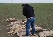 """Zeci de cadavre descoperite pe un câmp din Arad! """"Asistăm la un masacru!"""""""