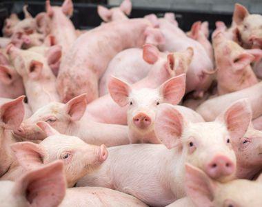 Ce se întâmplă cu cei care au peste cinci porci în ogradă. Anunț de ultimă oră