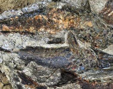 Peşti fosilizaţi din ziua în care un asteroid a lovit Pământul acum 66 de milioane de...