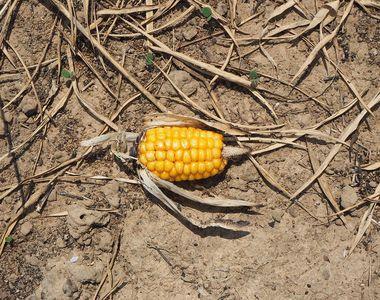 Agricultorii din Romania sunt DISTRUSI! Urmeaza o seceta extrema ce le ameninta culturile