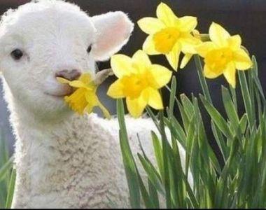 Cum o să fie vremea de Paște. Anunțul venit de la ANM