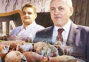 Fiul lui Liviu Dragnea a ieşit din ferma de porci care are datorii de 3,5 milioane de euro! Partenerul de afaceri al lui Valentin a fost condamnat la închisoare